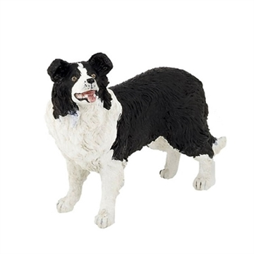Border collie hund